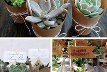Cactus souvenir