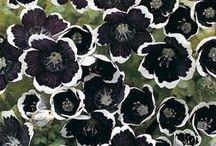 black white flower