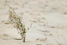 Fiore nel desert
