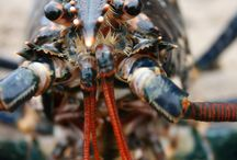 Who we are at The Firth of Forth Lobster Hatchery / Meet the staff and the lobsters