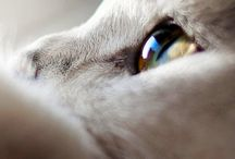 Gatos / Independientes