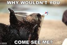 Oregon Coast Aquarium Memes / The fun and the funny