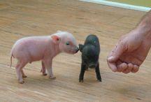 Djur jag vill ha. / by Pia Forsberg