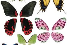 buterfly wings