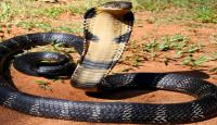 Poisonous Snakes Known To Man / Listed below are the Top 10 Most Venomous Snakes In The World.