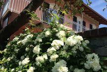 B & B L'alloro / Pernottamento e prima colazione in Piemonte a Cremolino