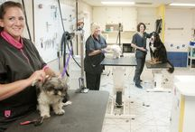 #1 Dog Groomers in Oviedo, FL / Proud to be the leader in dog grooming in Oviedo, FL since 2002!