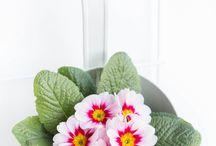 Blumen März
