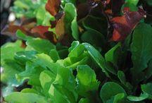 Gardening for Autumn Food