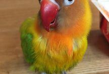 Crazy parrots
