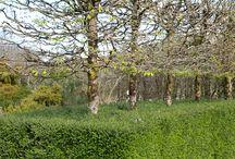 Green walls, hedges