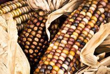 Corn / by Boo Jay