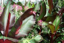 Red Foliage Plants / Red foliage plants at Urban Jungle plant nursery.