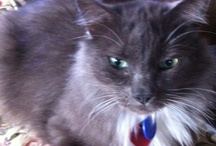 Cat Report / The Sullivan cats and the life they lead - Rocky (tuxedo) - Smokey (aka @MrMoeCat) - Max and Molly Malone (bro and sis) / by Joyce Sullivan