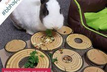 Train My Bunny