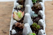 Gardening/ Plants
