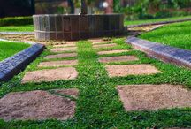 lush gardens and walkways / lush front garden south Africa