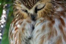 Owls ^•^