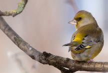 Birds / Birds who live near us