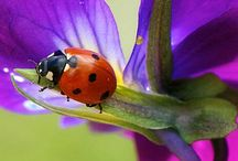 Lady Bug Lady Bug / pictures of Lady bug Beedles / by Denise Bailey