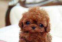 cute >,<