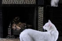 Cats and Interiors / Beautiful cats in beautiful settings