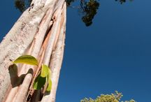 Árvores do Cerrado. / Fotos da área de cerrado que esta sendo recuperada pelo Curupira.