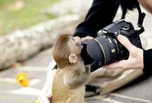 Animals(: