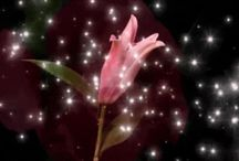 Flowers, Kwiaty