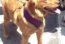 DOGTAILS REVIEWS / Natural Dogtails - Great for your dog's fur, mentality, and our Earth. www.DogtailsShop.com