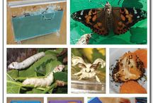 Preschool - Insects/Bugs / by Barbara Dunivant