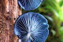ciuperci deosebite