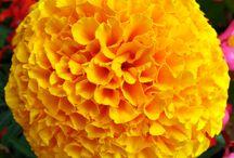 yelloww / by Joseph Trudeau