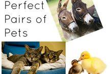 Misc Pet Photos / Extra stuff!