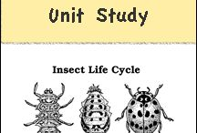 MFW K Insect Unit