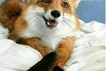 Лиса Патрикеевна / ы не видели в лесу Ярко-рыжую лису? Эта рыжая плутовка След свой прячет очень ловко