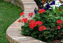 bedengan / flowers bed