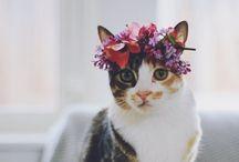 animals&Flowers