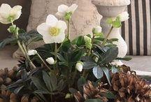 truhliky květiny