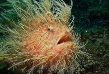Weird looking Fish