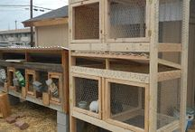 Bunnies, Cages, etc