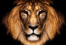 ❤ ANIMALS ❤
