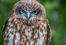 [Etudiants IP] Photo animalière / Retruvez ici les meilleures photos animalières des étudiants de l'Institut de la Photographie.