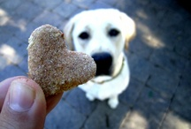 DIY: Pet Treats & Stuff ♥ / by Inspired...