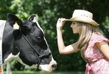 Dairy development program