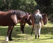 Equine Reiki / Some beautiful images from Equine Reiki courses facilitated by Four Winds Reiki