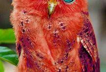 pássaros lindos...
