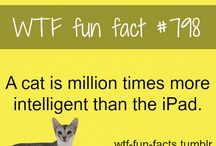 WTF Fun Facts / Unbelievable facts that will blow your mind.  O:
