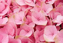 Floreciendo en Rosa