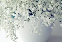 Winter / Floral arrangements and Home Decor for Winter-time